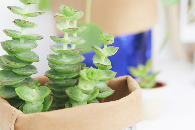 DIY Tutorial: Pflanztöpfe aus Nähpappe